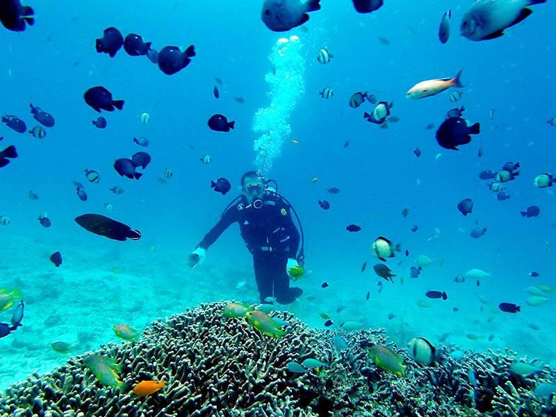【夏季】みんな島海水浴体験ダイビング