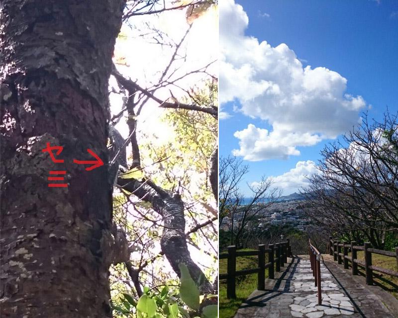 泉河☆鉄板焼き10月限定メニュー!