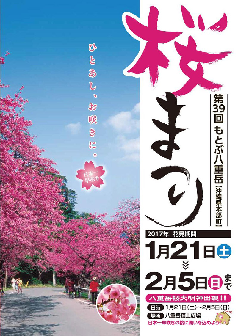 ssakura.geo.jp Mt. Yae Sakura Festival who jumps over the 39th