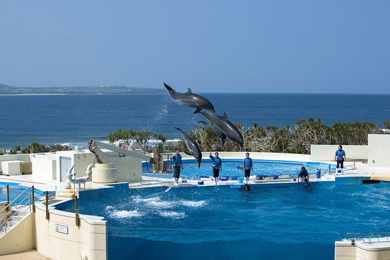 海洋博公園休園のお知らせ