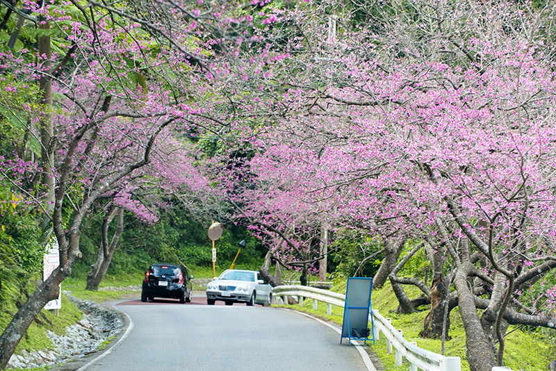 沖縄はお花の季節間近です★