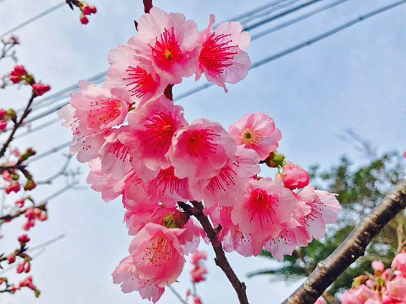 沖縄花のカーニバル2018