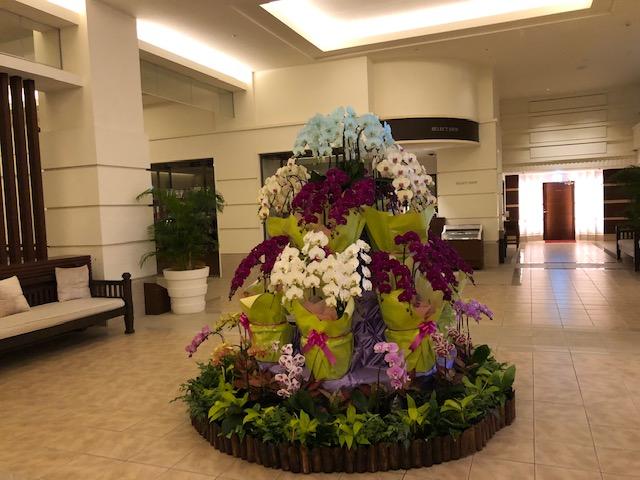 蘭の花を展示中
