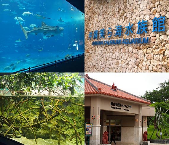 Churaumi Aquarium is advantageous in the morning from one and the evening!
