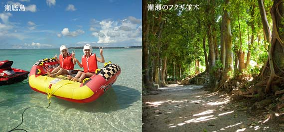 Northern area Sesoko Island, Fukugi row of trees of Bise where are popular among tourists